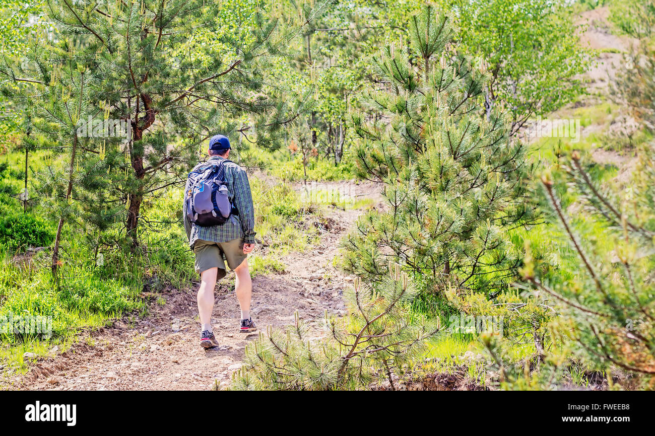 Young man with backpack and short pants hiking through a pine forest. Stock Photo