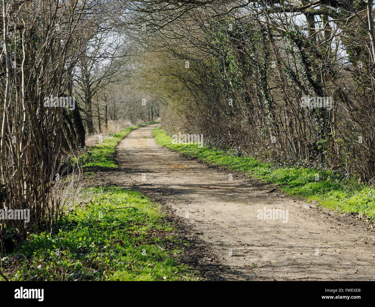 Marriott's Way shared use footpath, cycle way , bridleway along an abandoned railway line in mid-Norfolk. Scene - Stock Image