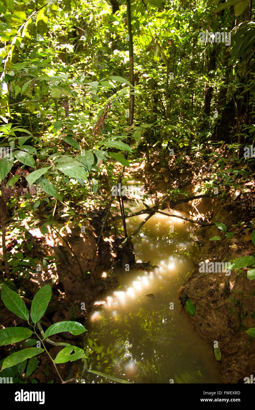 General plane of the Amazon jungle and primary forest, near Iquitos, Amazonian, Loreto, Peru. - Stock Image
