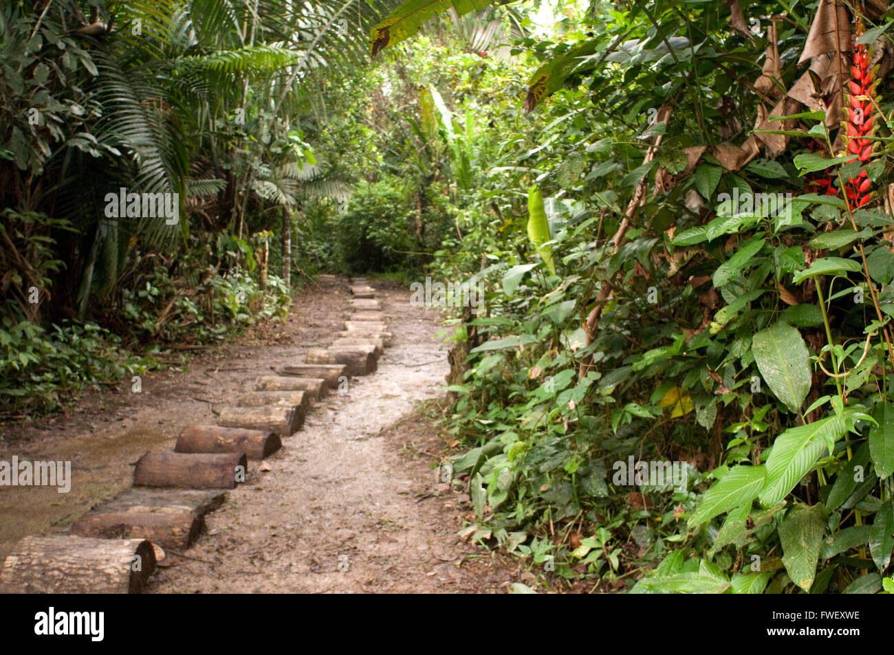 Way to get inside the Yagua village in the primary forest about 40 kilometers from Iquitos near the town of Indiana, - Stock Image