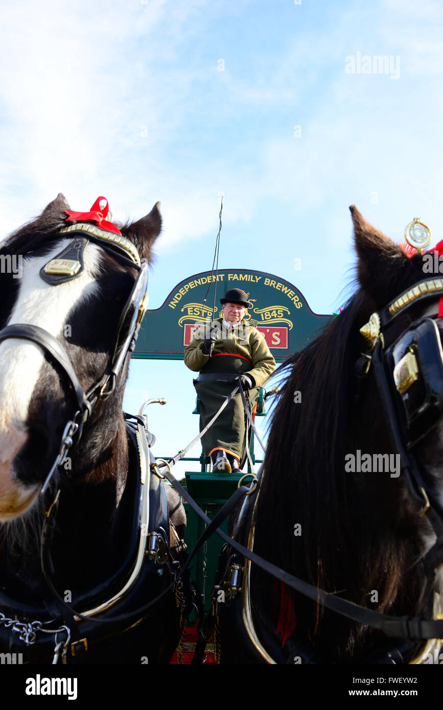 Griffin & Pride shire horses pulling the  Fullers Brewery dray giving rides to the public at the The Betfair - Stock Image