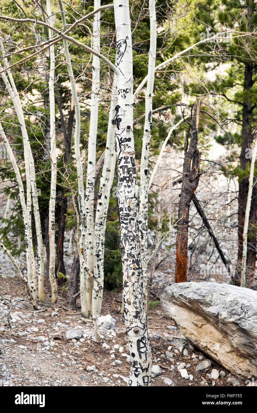 Graffiti carved into aspen trees on Mount Charleston, Clark County Nevada - Stock Image