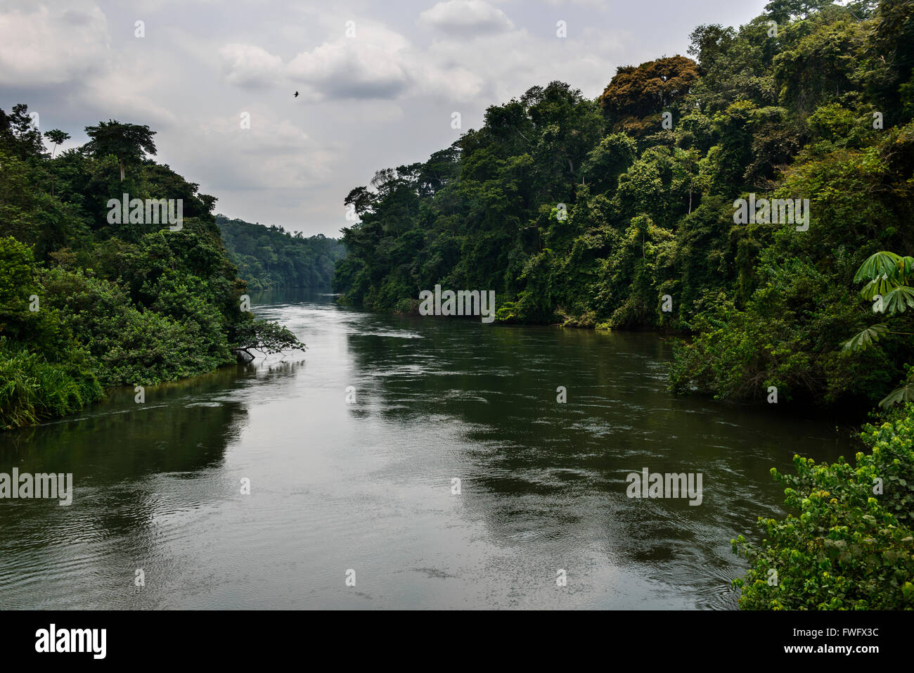 The rivers of the rainforest, Gabon, Central Africa - Stock Image