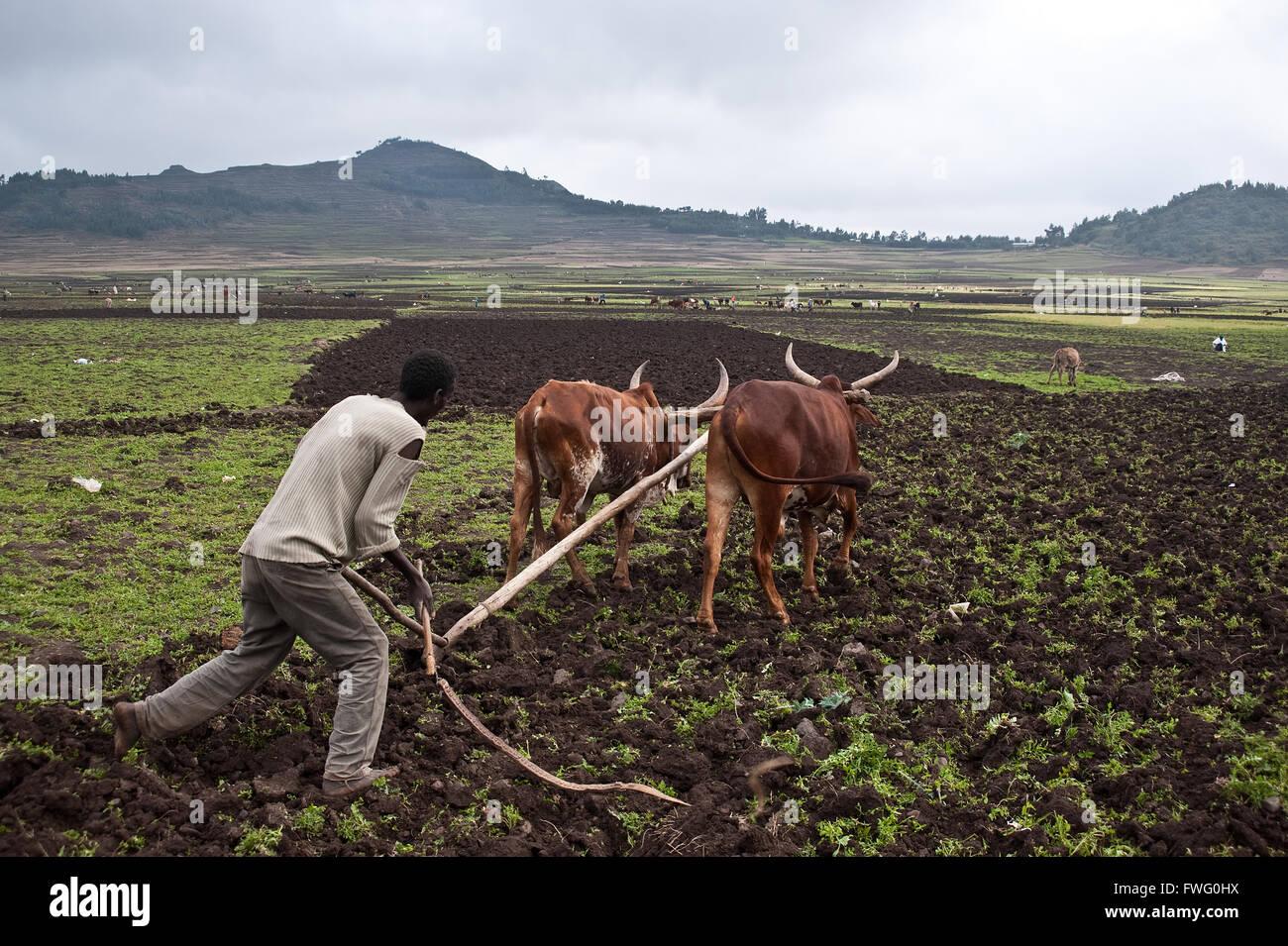 Farmer ploughing ( Ethiopia) - Stock Image