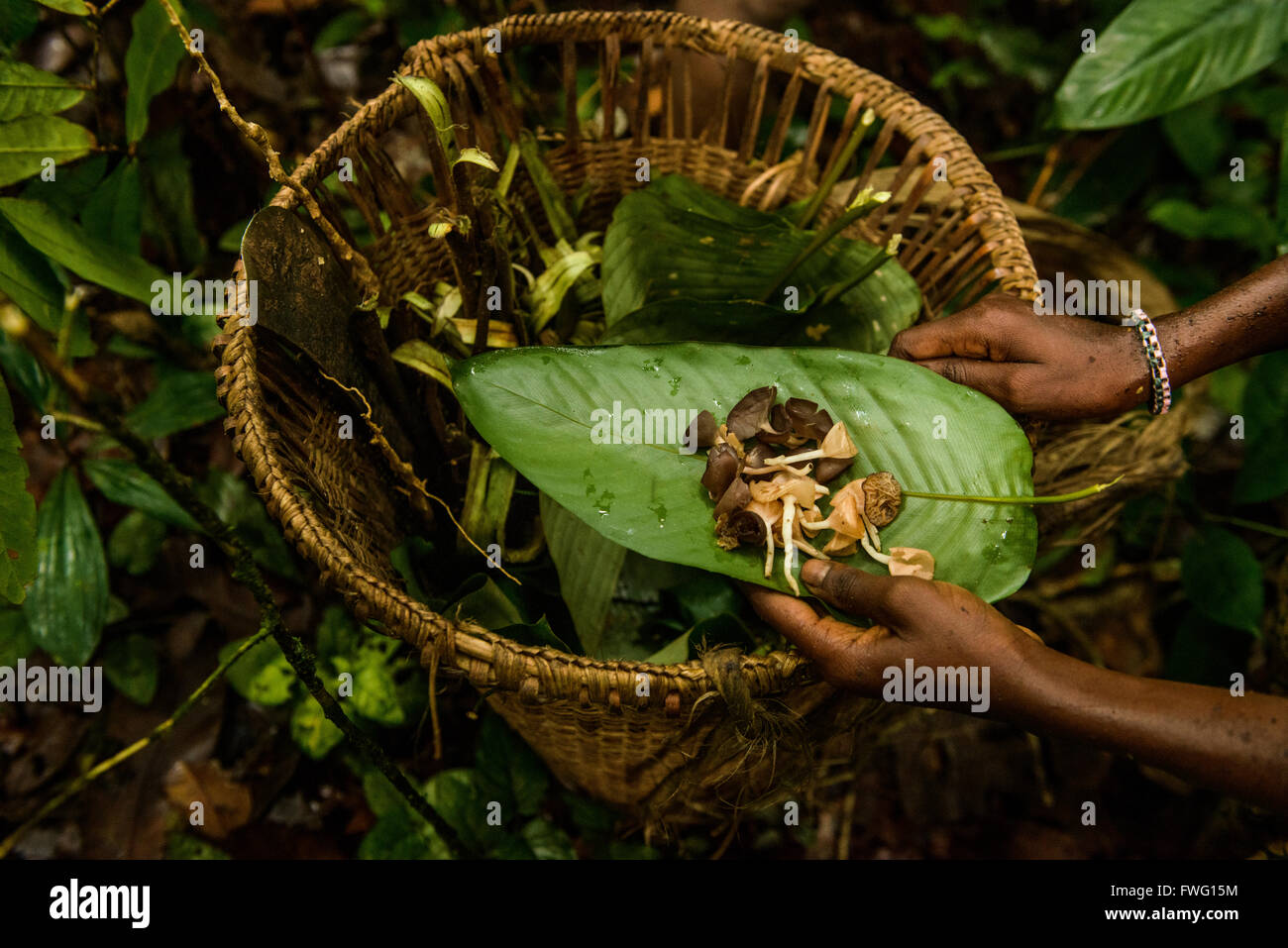 Bayaka Pygmies in the equatorial rainforest, Central African Republic, Africa Stock Photo
