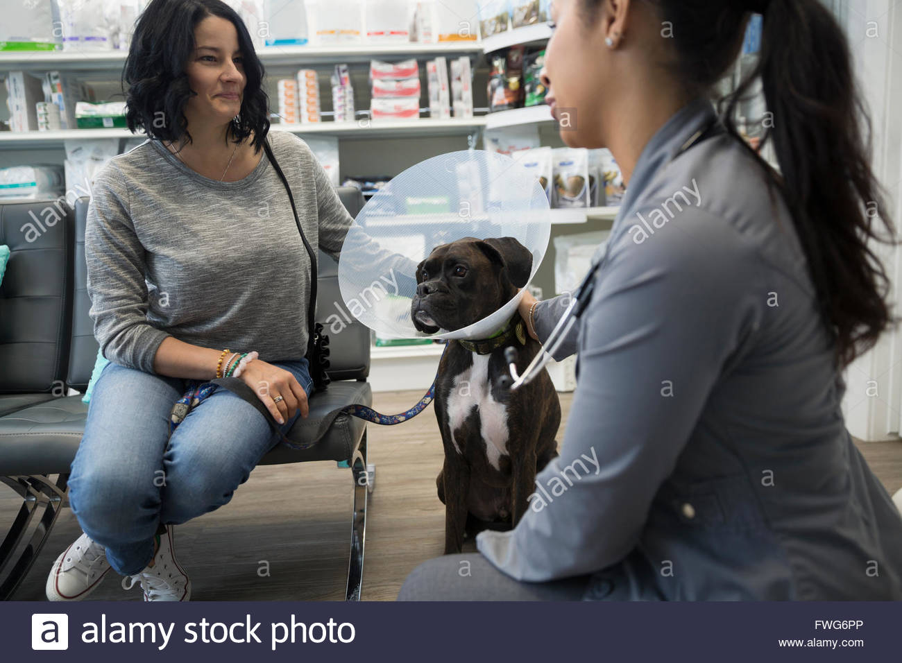 Veterinarian talking to woman with dog wearing cone - Stock Image
