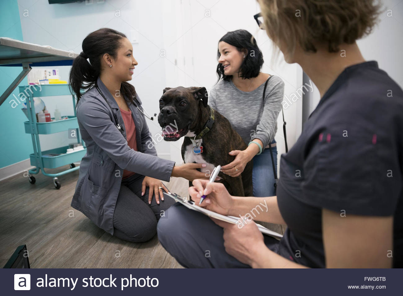Veterinarians talking with dog owner clinic examination room - Stock Image