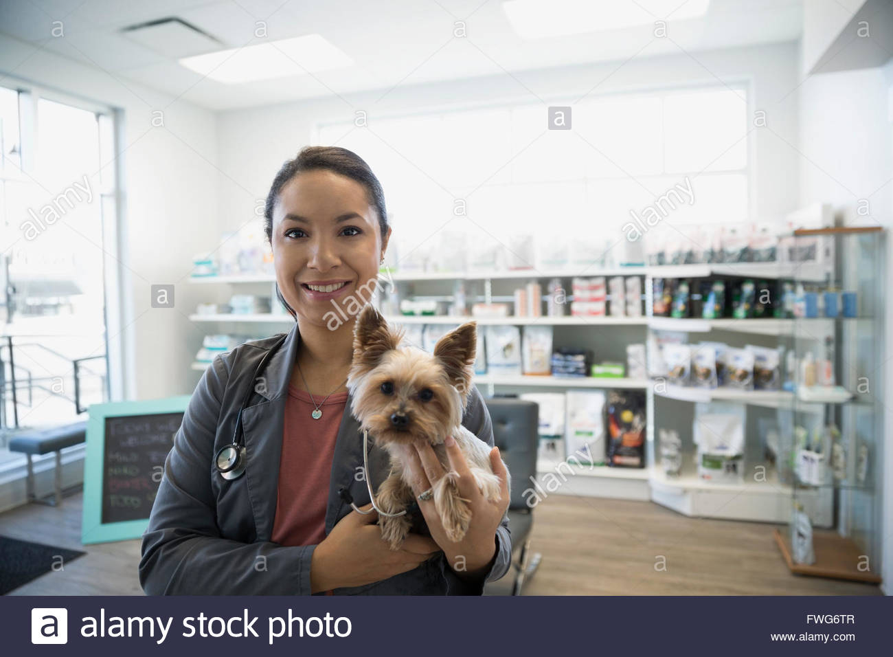 Portrait smiling veterinarian holding small dog in clinic - Stock Image
