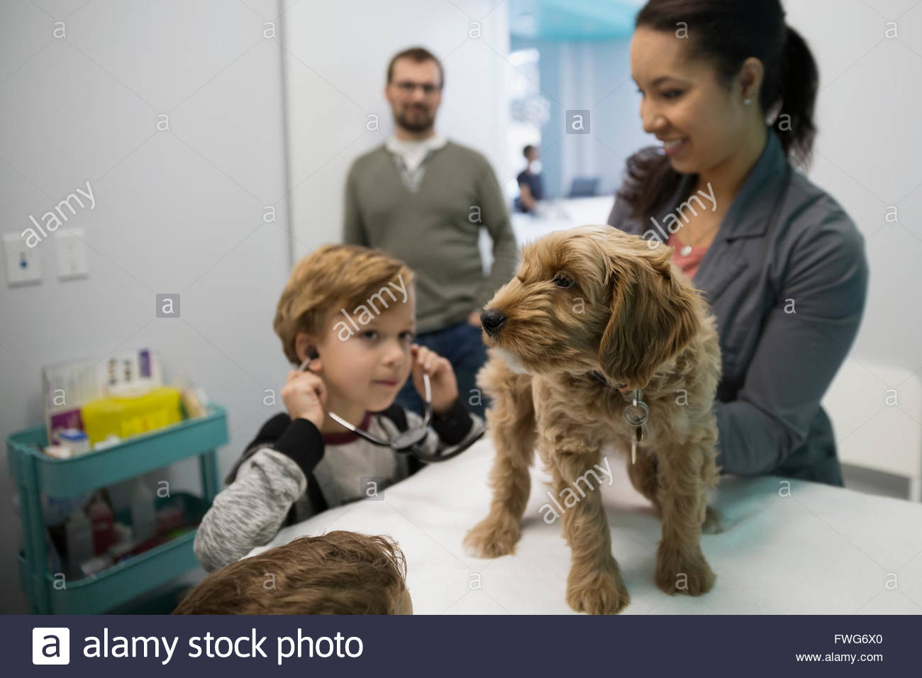 Veterinarian and boy with stethoscope examining dog - Stock Image