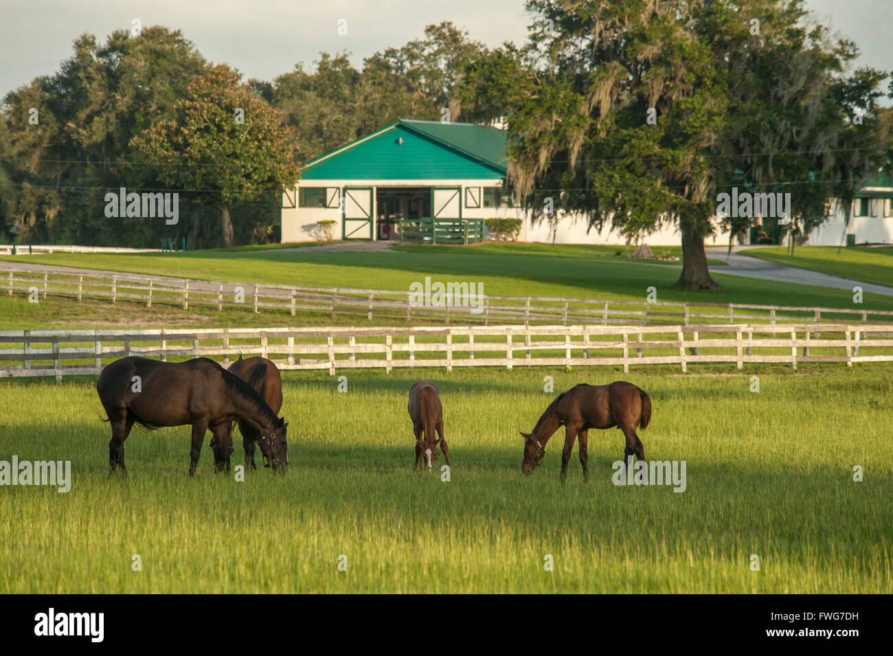 Scenic Thoroughbred Horse Farm - Stock Image