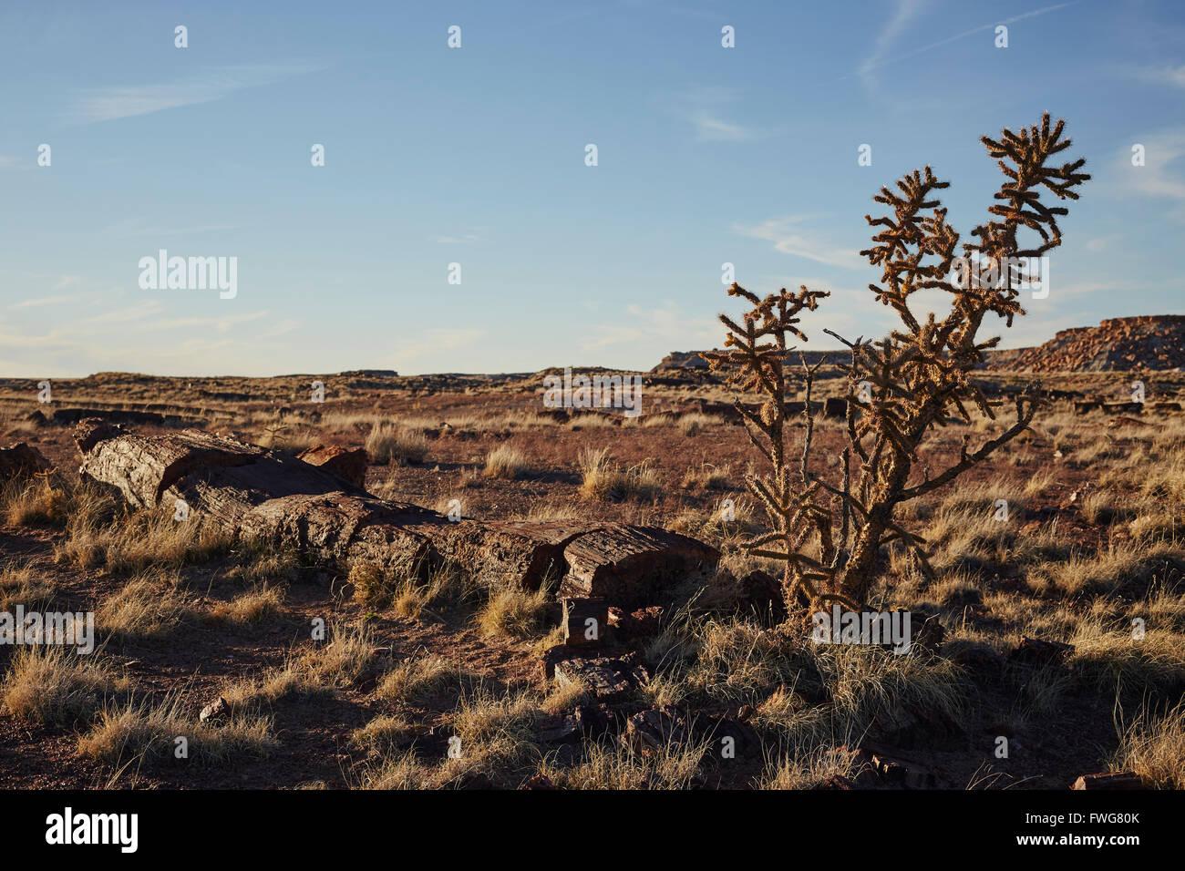 Petrified Forest National Park, Arizona, USA - Stock Image