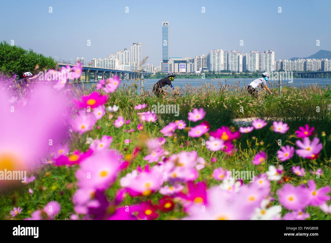 Cyclists in the Han River Park in Seoul, South Korea. - Stock Image