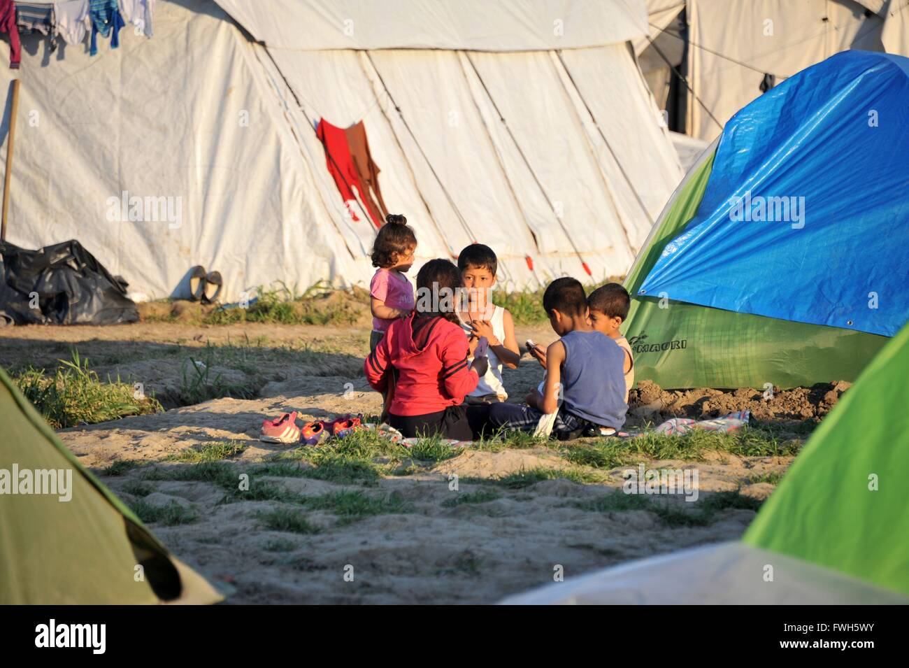 Dusk in Idomeni. Four kids playing cards between the tents - 31 March 2016 - Stock Image