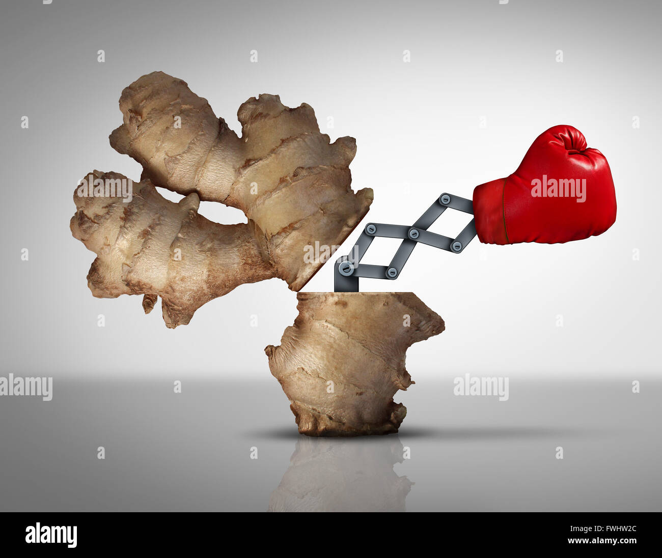 Ginger medicine concept as a natural herbal medicinal root opened with a boxing glove icon emerging with a 3D illustration - Stock Image