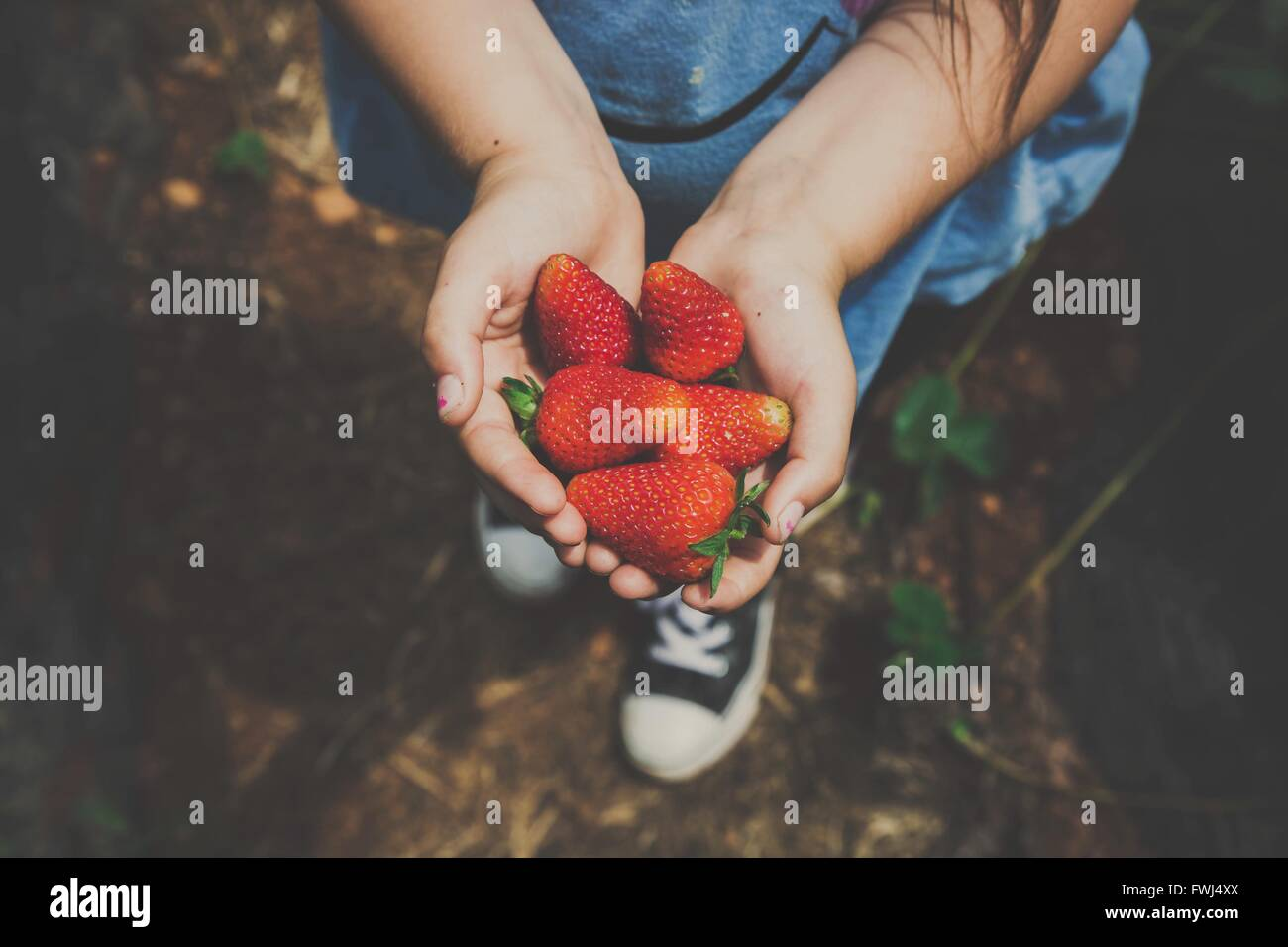 Girl Holding Strawberries - Stock Image