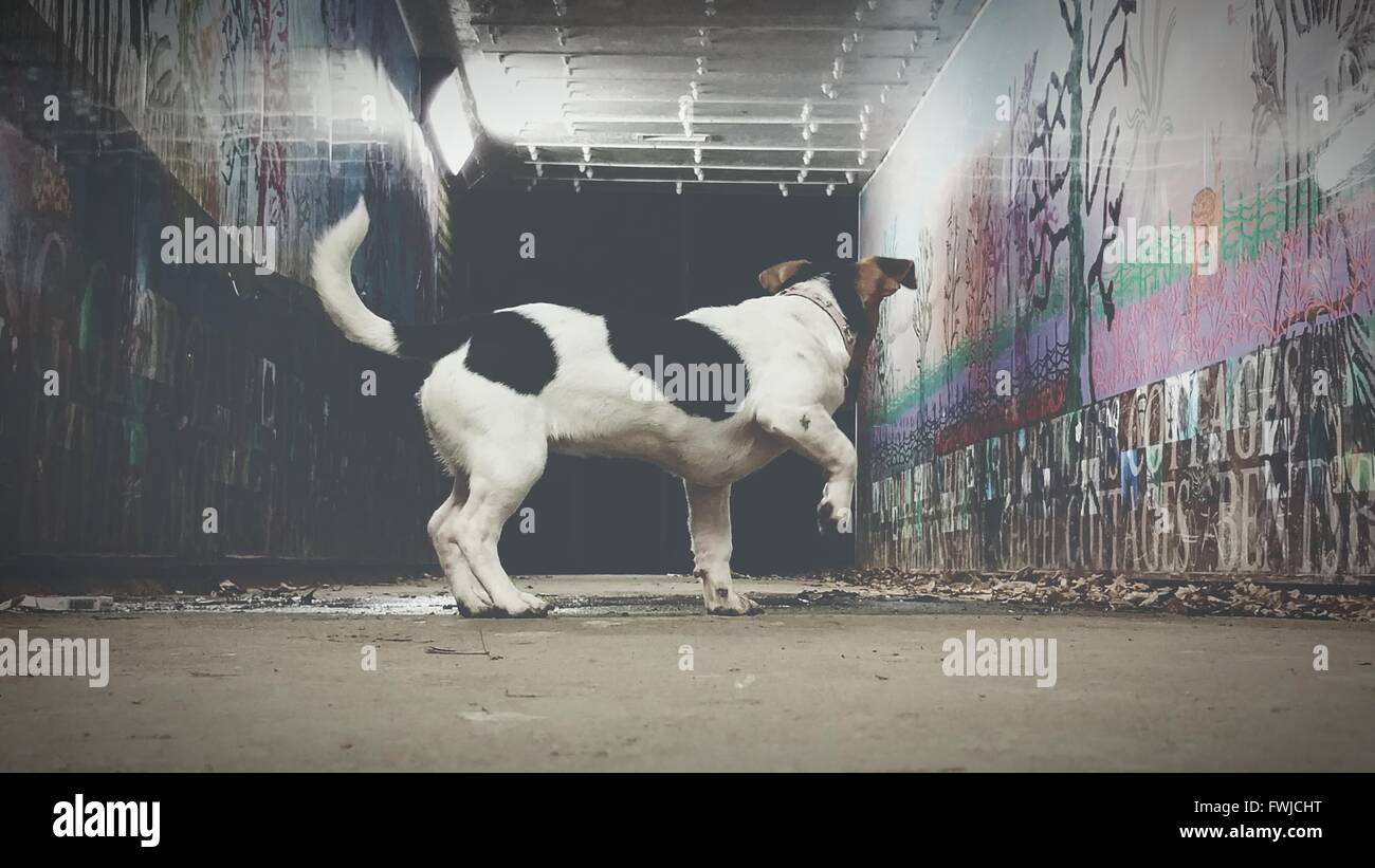 Side View Of Dog Standing In Tunnel - Stock Image