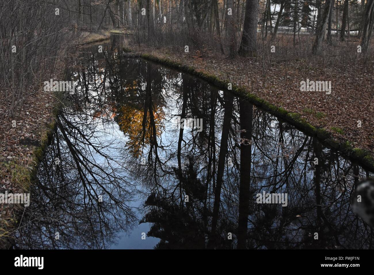 Trees Reflecting In Stream In Forest During Autumn - Stock Image