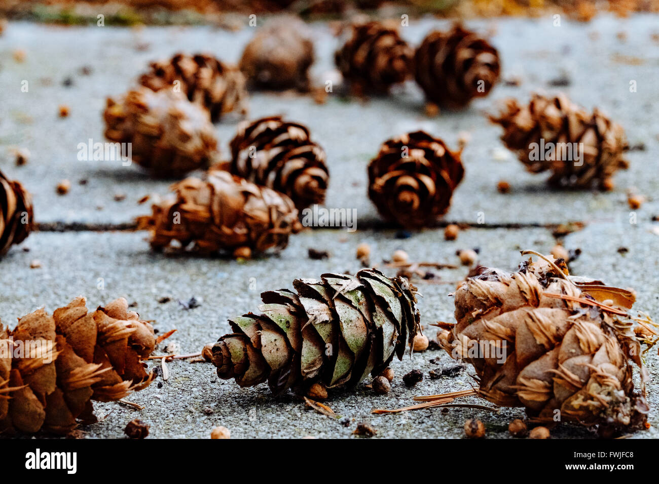 Close-Up Of Pine Cones On Surface - Stock Image