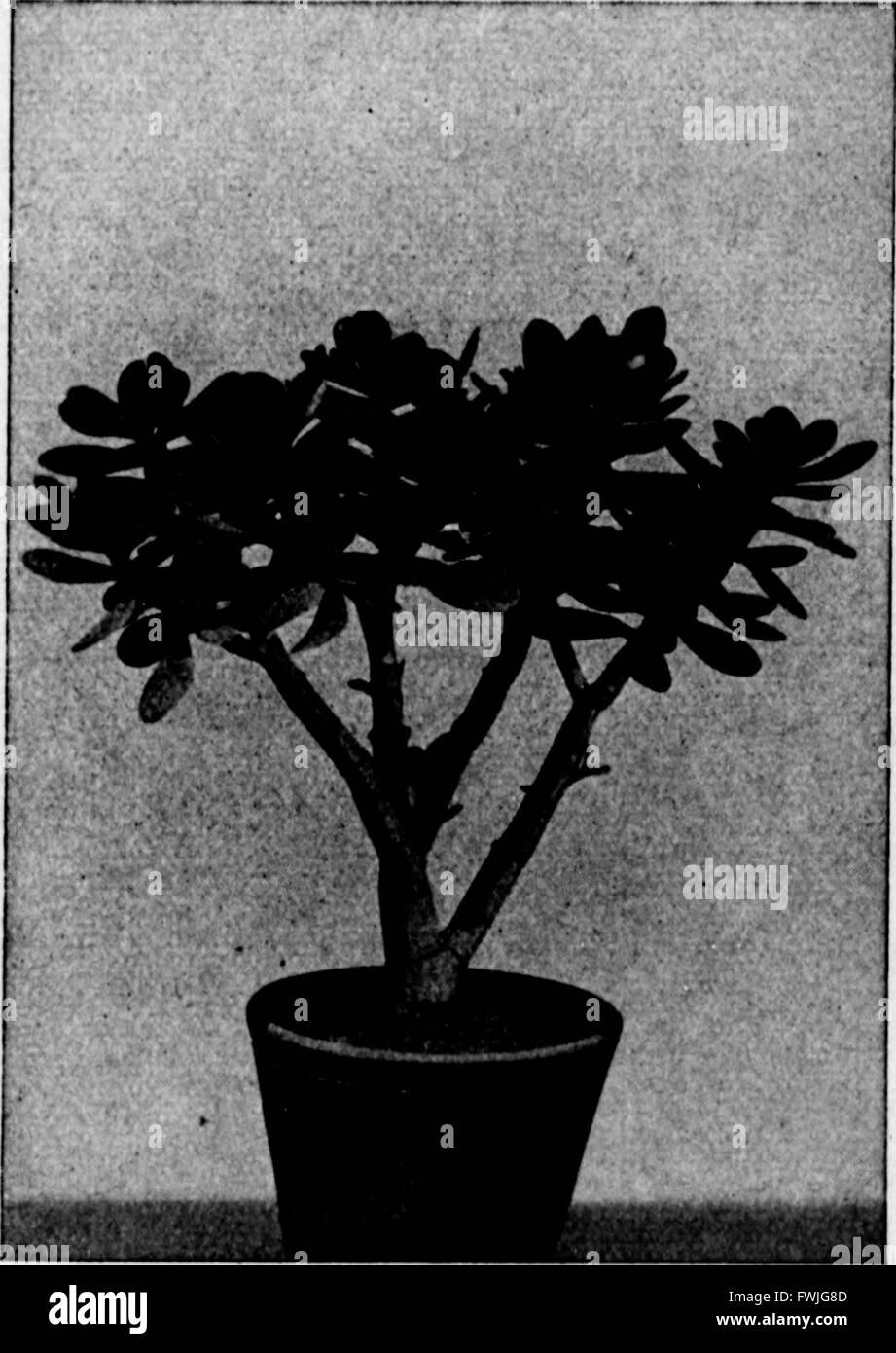 Arthur and Fritz Kahn Collection 1889-1932 Stock Photo