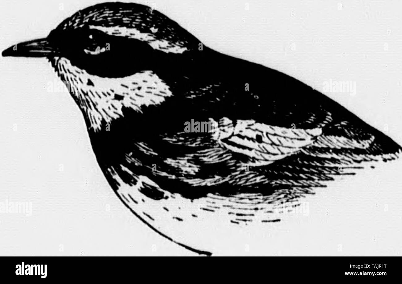 Birds of village and field (microform) - a bird book for beginners (1898) Stock Photo