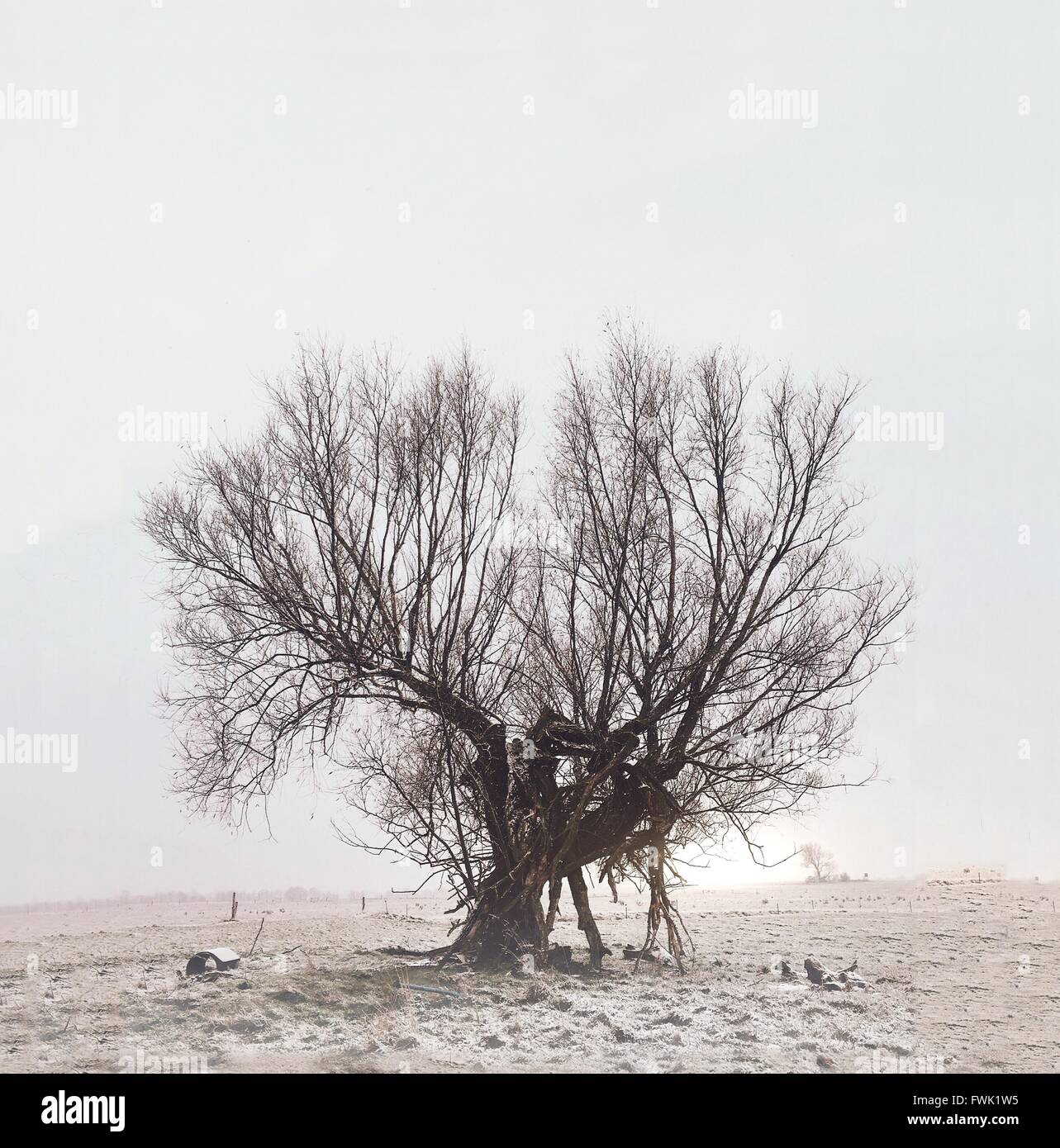 Bare Tree On Field Against Clear Sky - Stock Image