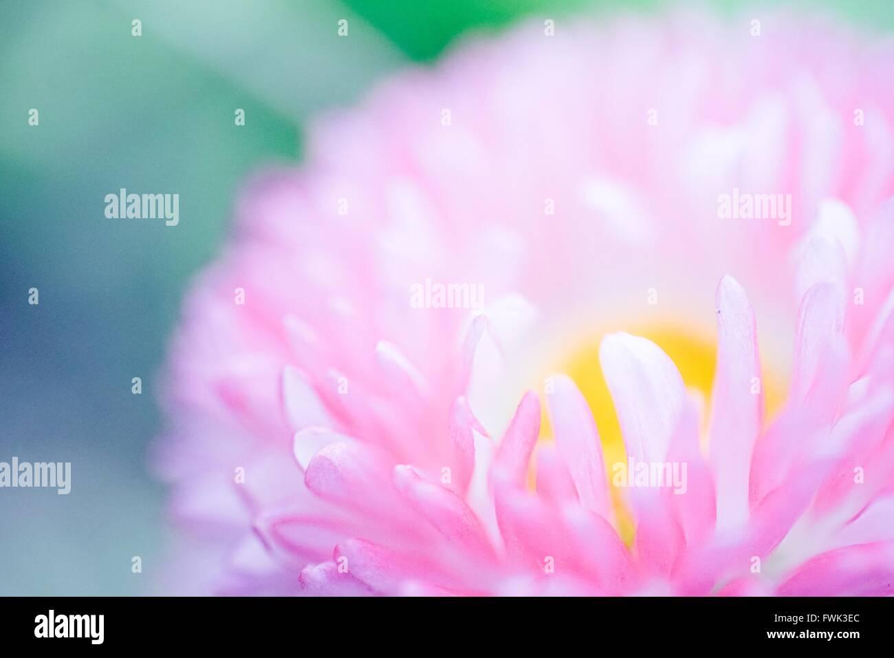 Detail Shot Of Flower Against Blurred Background - Stock Image