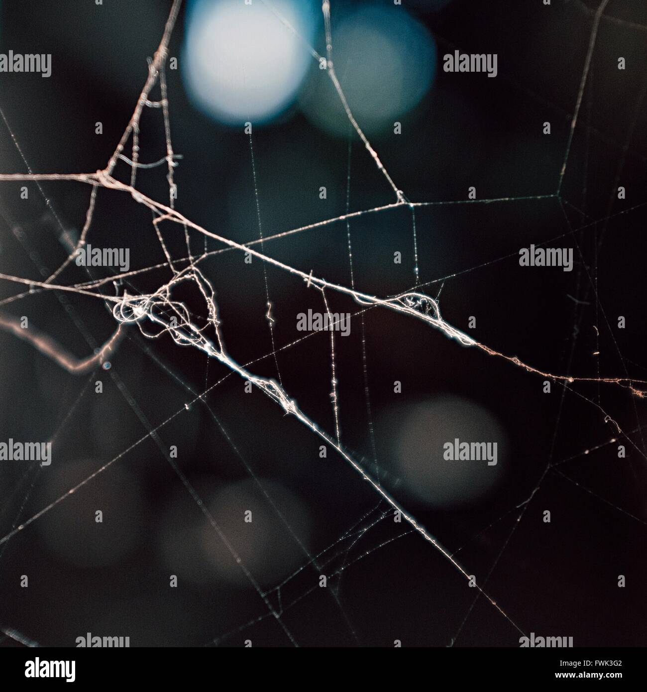 Close-Up Of Cobweb Against Blurred Background - Stock Image