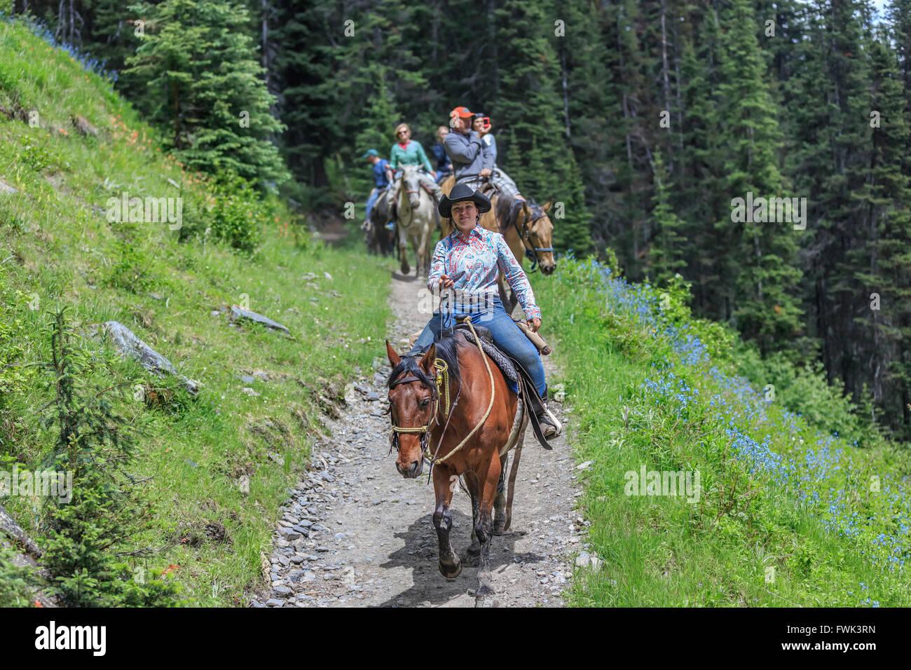 Horseback riders on a backcountry trail ride, Banff National Park, Alberta, Canada. - Stock Image