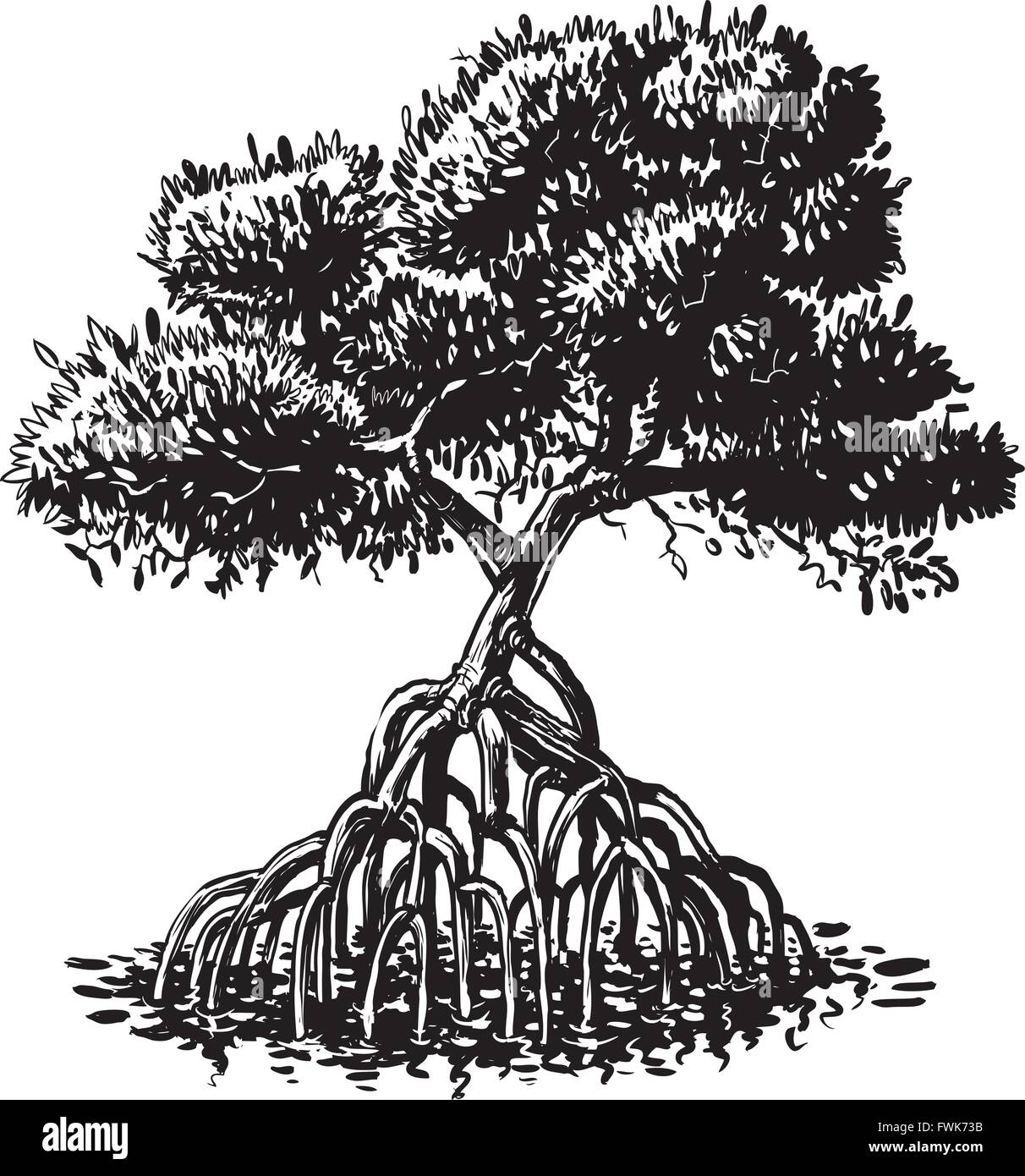 Vector cartoon clip art illustration of a black and white or monochromatic ink drawing of a mangrove tree. - Stock Image