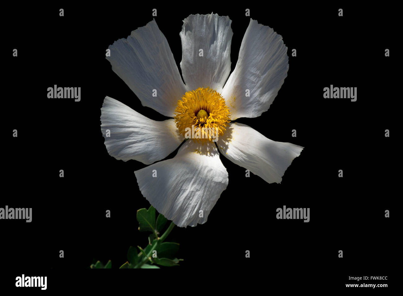 Close Up Of White Flower Blooming In Park At Night Stock Photo