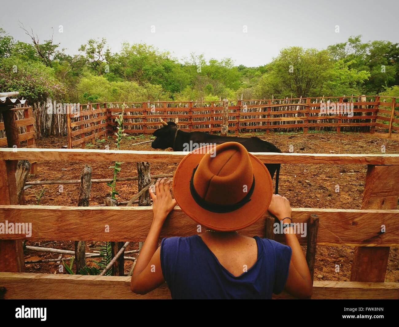 Rear View Of Woman With Cow At Ranch Against Sky - Stock Image