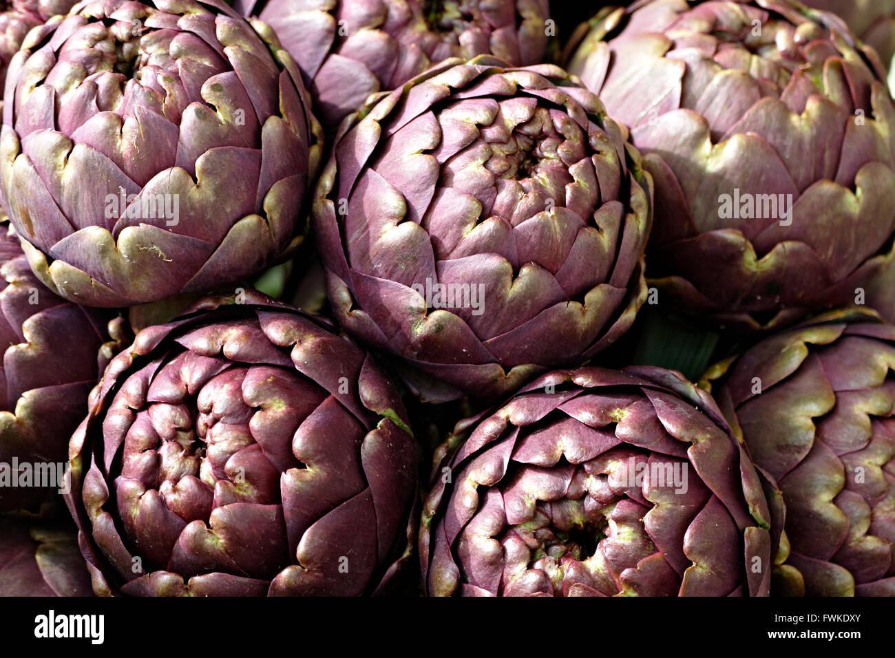 Artichoke (Cynara cardunculus, Syn. Cynara scolymus) - Stock Image