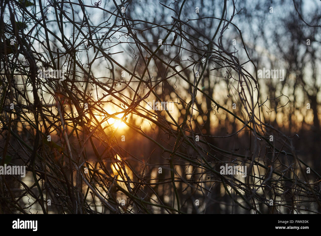Mississippi River and scrub woods at sunset near Vicksburg, MS, USA - Stock Image