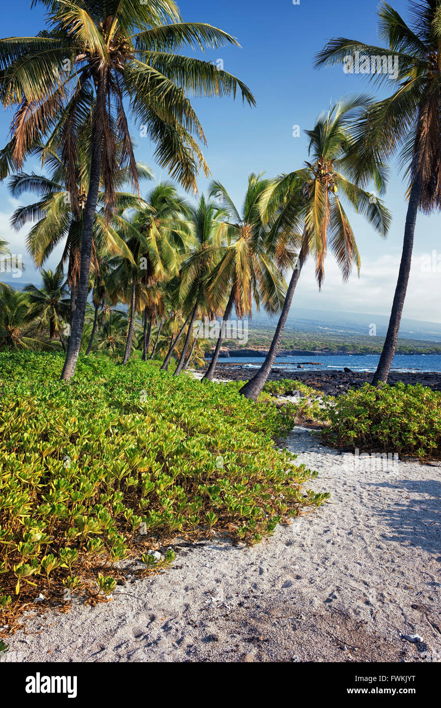 The tropical beauty along the south Kona Coast at The Place of Refuge National Historical Park on the Big Island - Stock Image