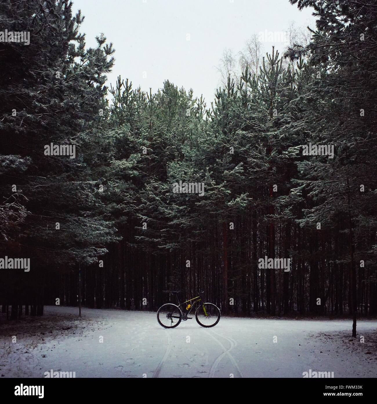 Bicycle Parked On Snow Covered Field Against Trees In Forest - Stock Image