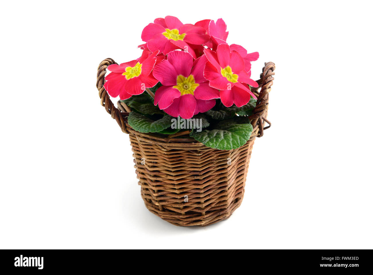 Pink Flower Pot Against White Background Stock Photo 101860037 Alamy