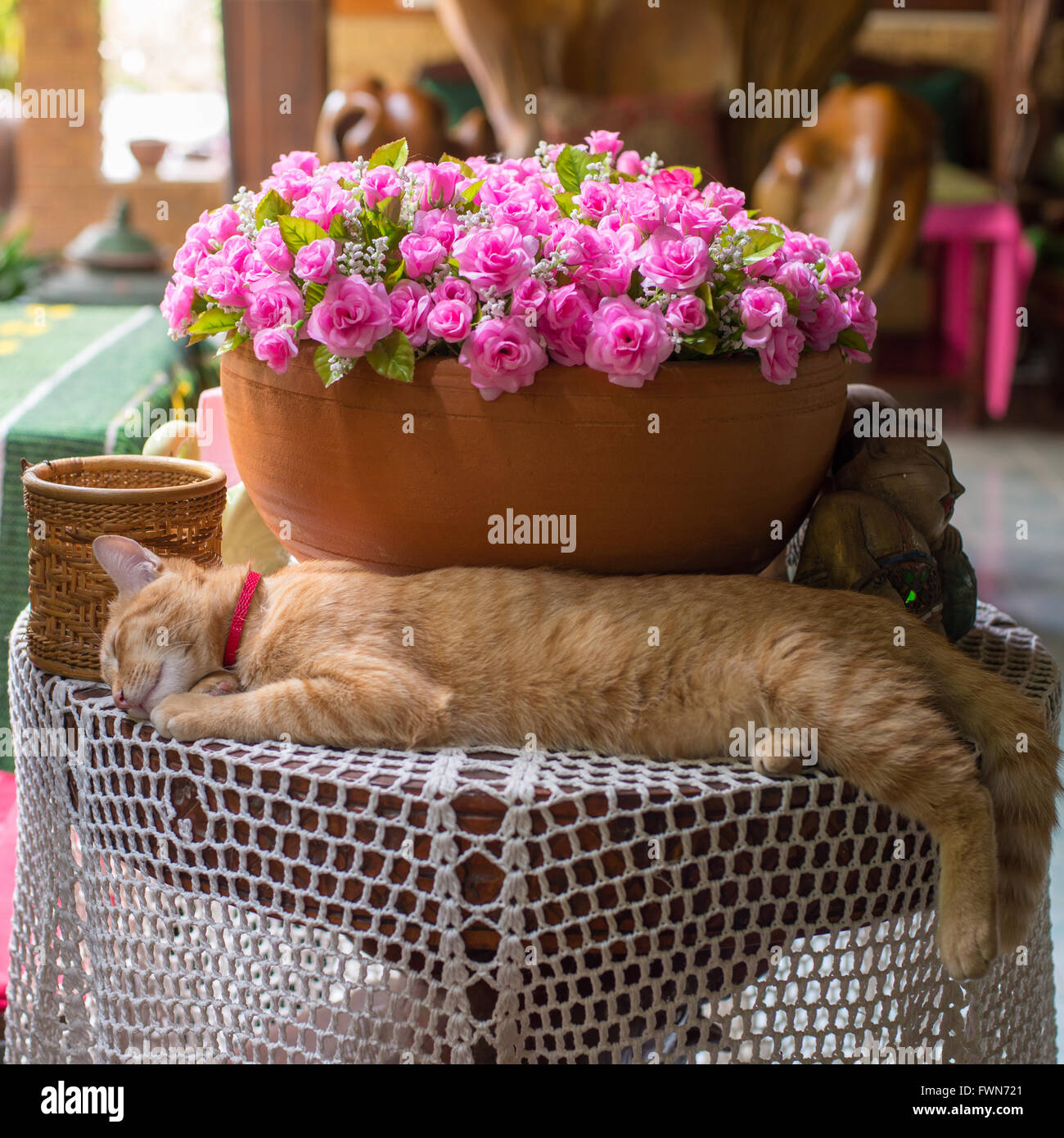 Cat takes an afternoon nap on the table with a bouquet of pink Stock ...