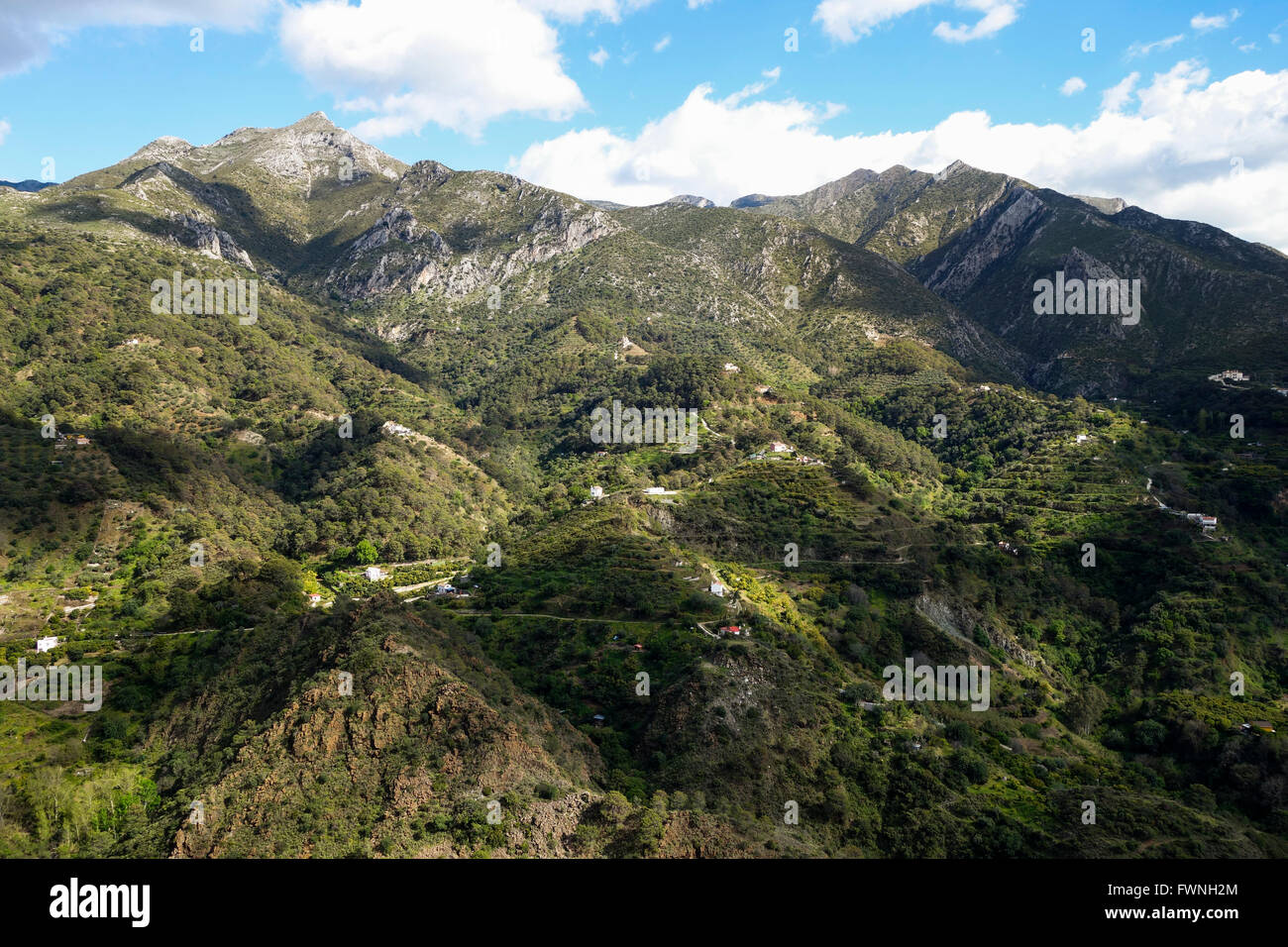 Andalusian countryside with Karstic Limestone mountain range behind, Sierra Blanca, next to the village of Istan, - Stock Image