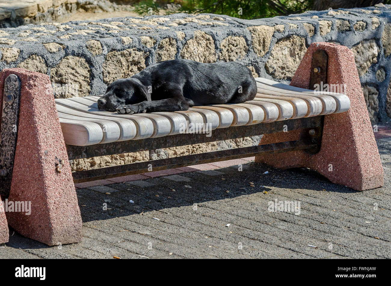 Stray dog sleeping on a bench on a street in the city of Kyrenia, Northern Cyprus. - Stock Image