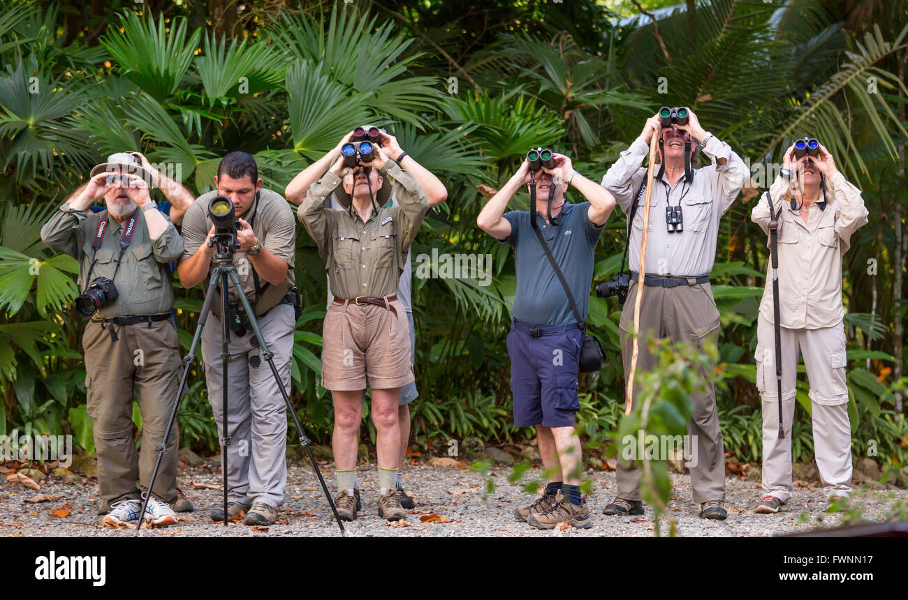 OSA PENINSULA, COSTA RICA - Eco-tourists viewing wildlife with binoculars in rain forest. - Stock Image