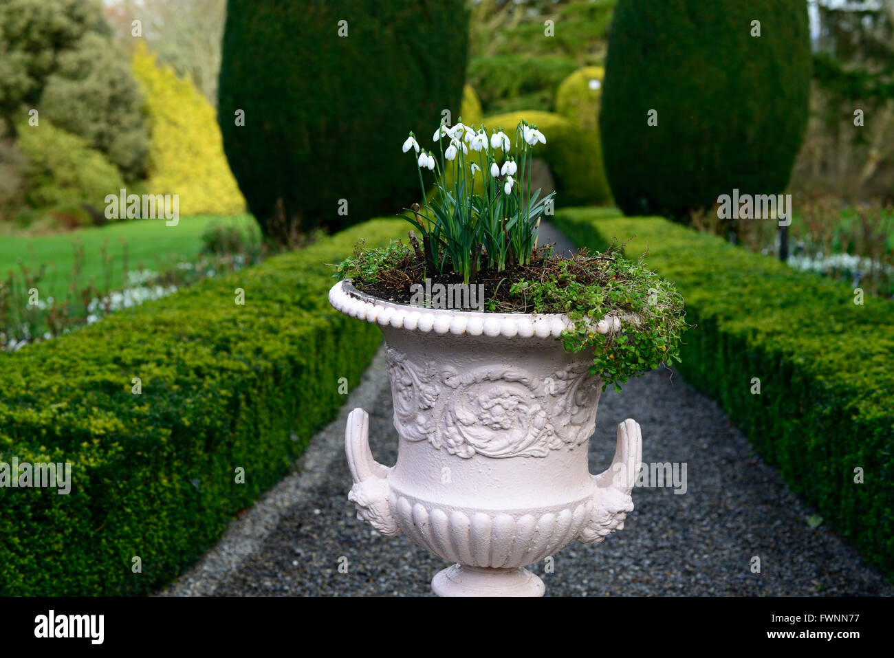 galanthus snowdrop planting urn pot decorative planter scheme Altamont gardens Carlow gardening RM Floral - Stock Image