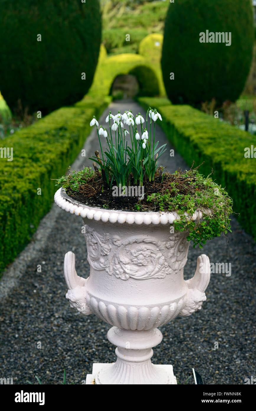 Galanthus Snowdrop Planting Urn Pot Decorative Planter Scheme