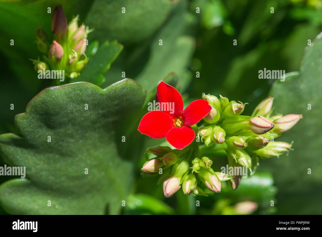 Fleur Coloree Stock Photos Fleur Coloree Stock Images Alamy