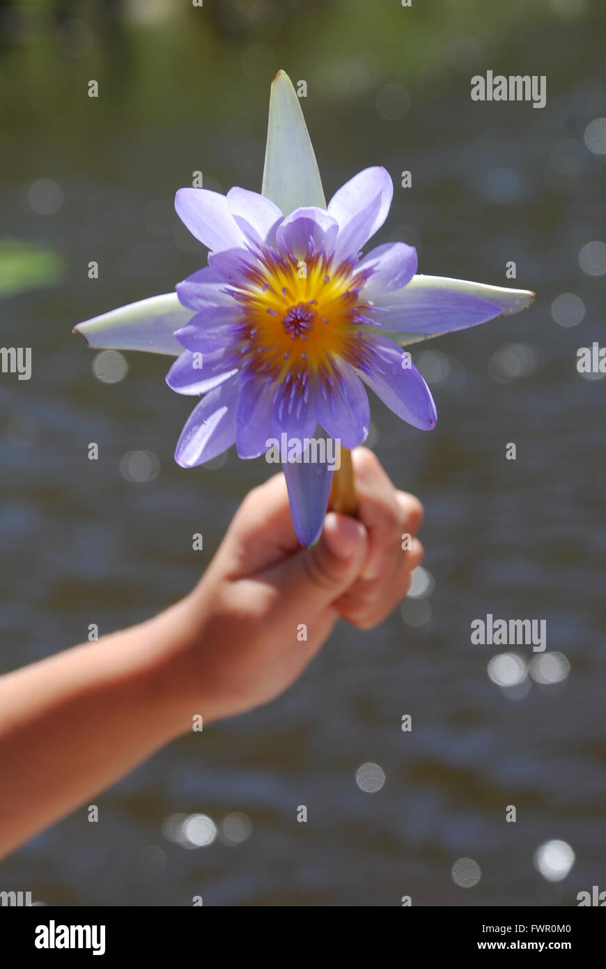 Stunning blue flower with sparkling river backdrop - Stock Image