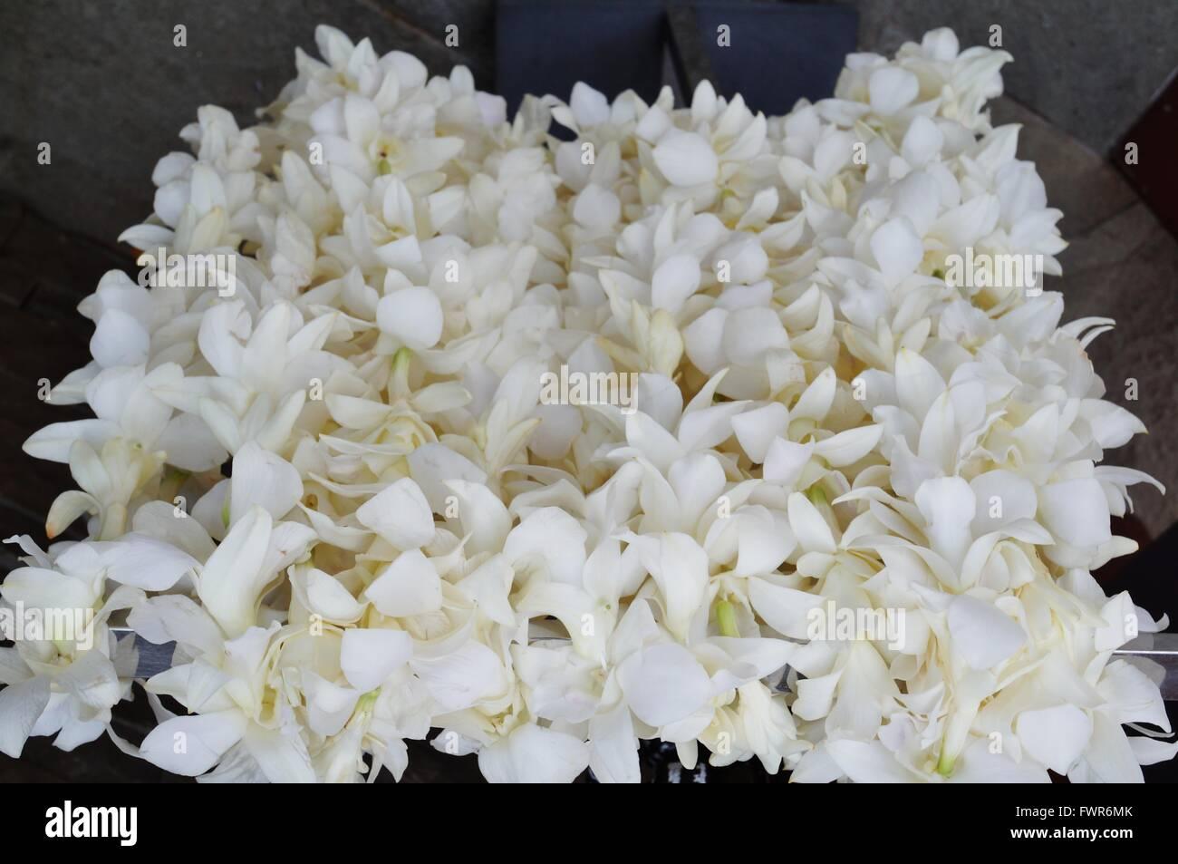 Tuberose Flower Stock Photos Tuberose Flower Stock Images Alamy