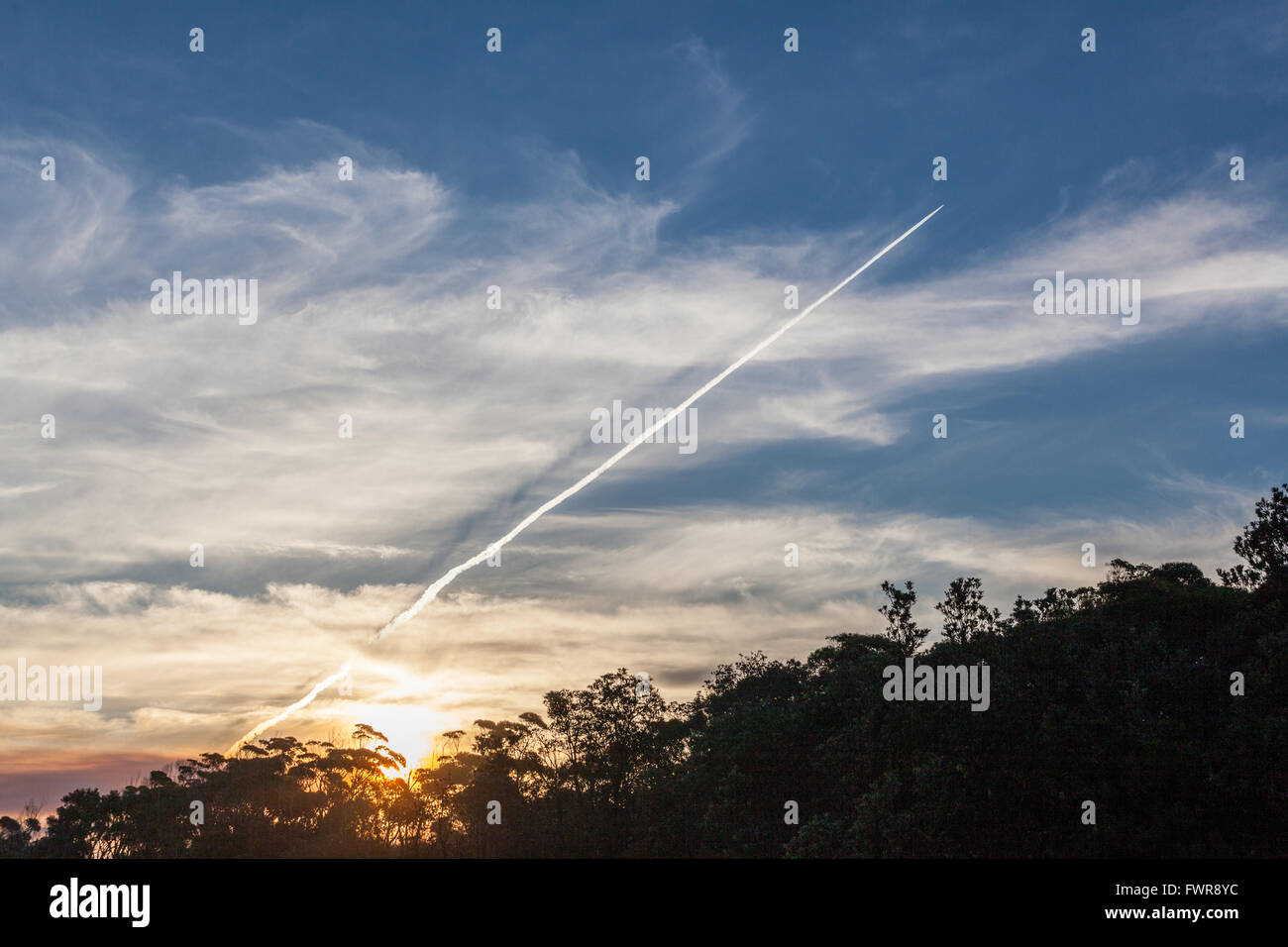 Diagonal jet plane trail in the sky at sunset with silhouettes of Australian coastal vegetation - Stock Image