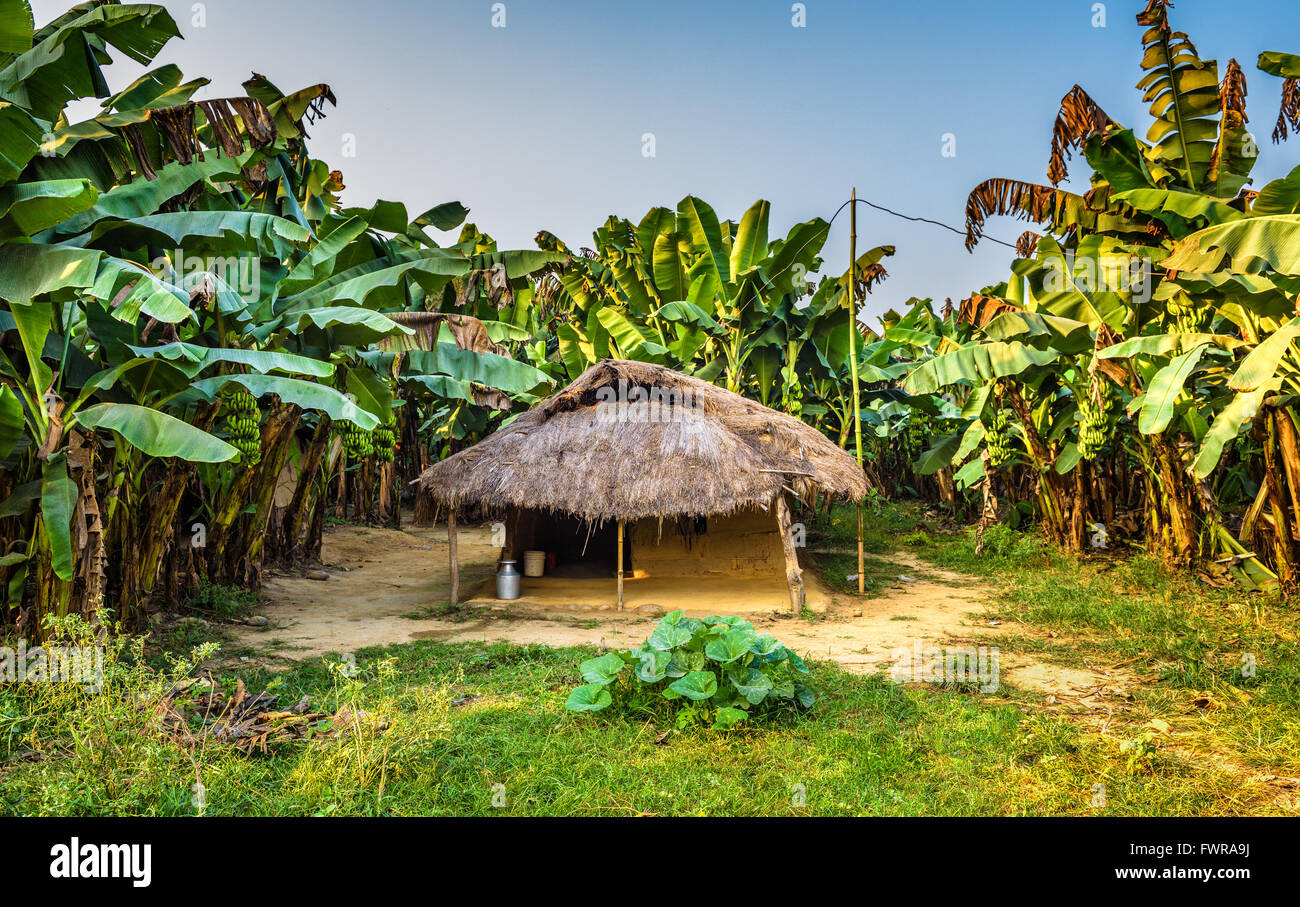 A little hut in  in the tropical jungle of Chitwan National Park, Nepal - Stock Image