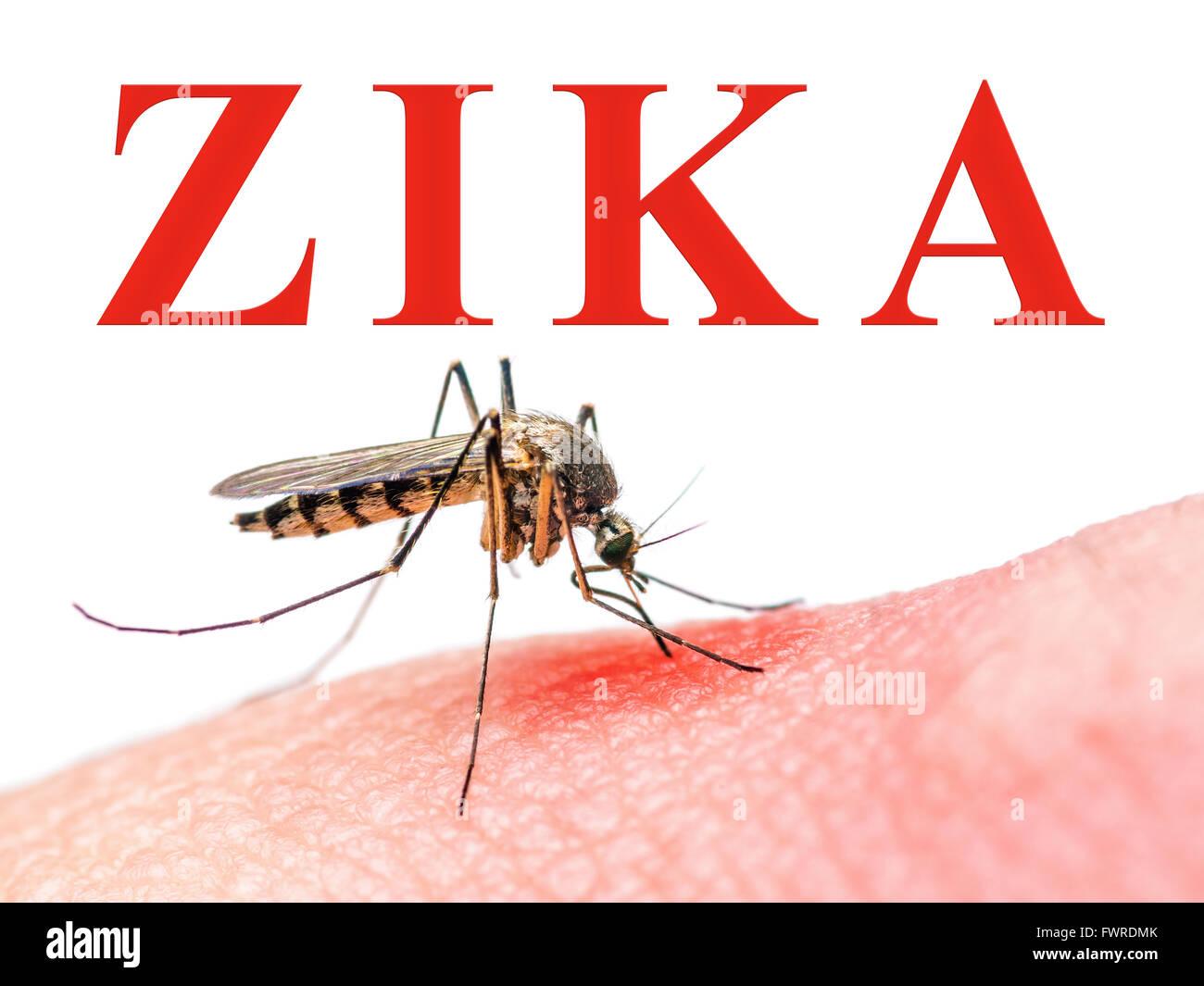 Zika Virus Mosquito - Stock Image
