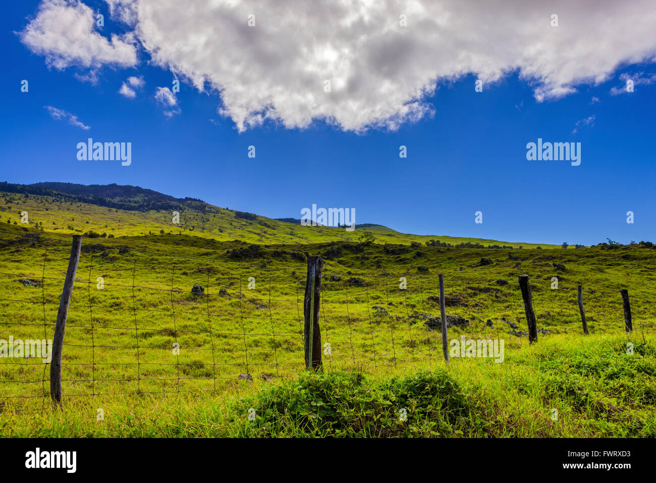 pastureland upcountry Maui - Stock Image