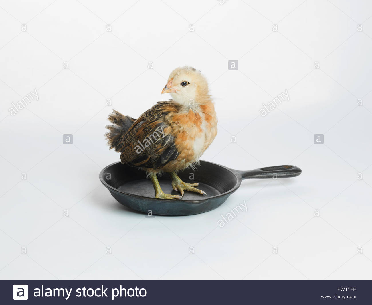 Chicken standing in pan - Stock Image